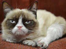 Grumpy Cat. © Фото - The Daily Mail